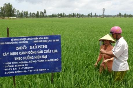 Verbesserung des Exportwerts von vietnamesischem Reis - ảnh 1