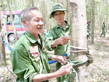 Provinz Quang Tri entwickelt Touren zum ehemaligen Schlachtfeld - ảnh 1