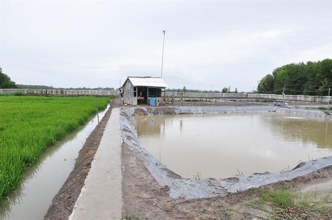 Effizientes und nachhaltiges Produktionsmodell von Reis und Garnelen - ảnh 1
