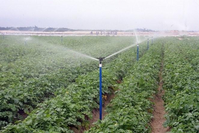 Chuyển đổi cây trồng để tiết kiệm nước - ảnh 1