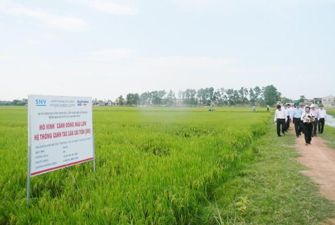 Quảng Bình xây dựng cánh đồng mẫu lớn tạo hiệu quả trong sản xuất nông nghiệp - ảnh 1