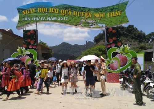 Sôi động ngày hội hái quả trên Cao nguyên Mộc Châu, Sơn La - ảnh 1