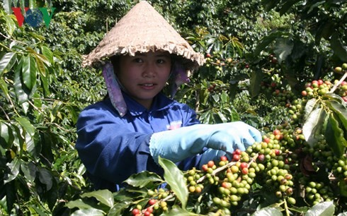 Ngày cà phê Việt Nam và phát triển ngành cà phê Việt Nam - ảnh 1