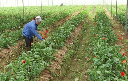 Neues Genossenschaftsmodell beim Aufbau ländlicher Gegenden - ảnh 1
