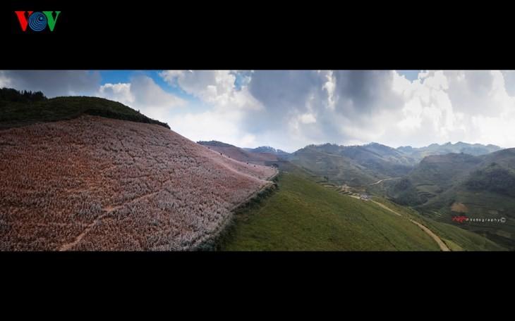 Die Schönheit des Buchweizen im Hochgebirge - ảnh 13