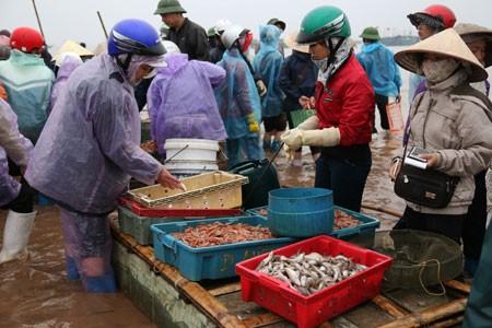 Morgens auf dem Fischmarkt in der Gemeinde Giao Hai in Nam Dinh - ảnh 1