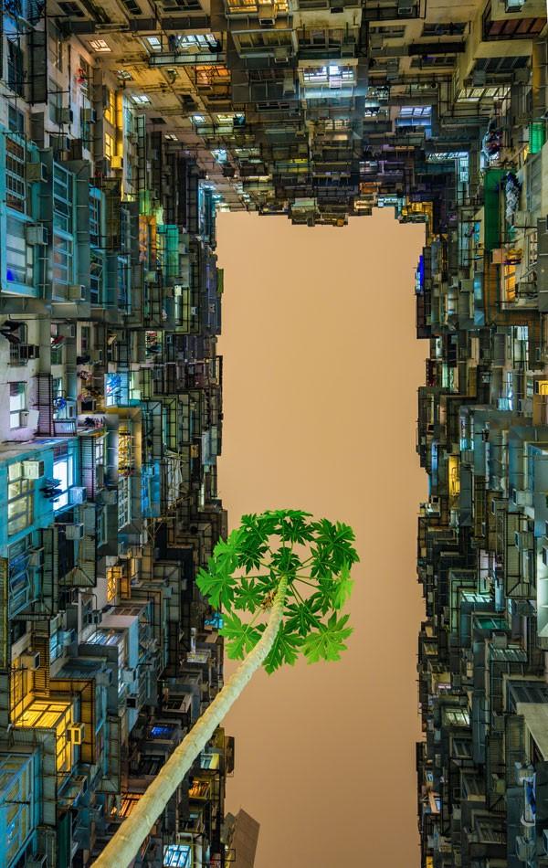 La photographie vietnamienne a de beaux jours devant elle - ảnh 3