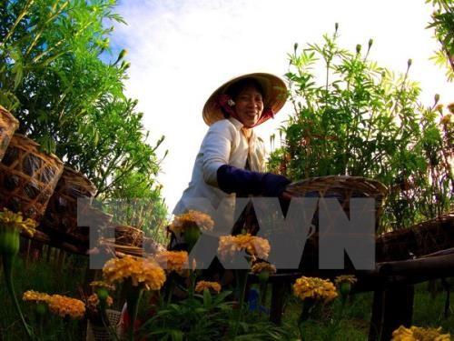 พัฒนาการเกษตรเพื่อรับมือการเปลี่ยนแปลงของสภาพภูมิอากาศอย่างมีประสิทธิภาพ - ảnh 1