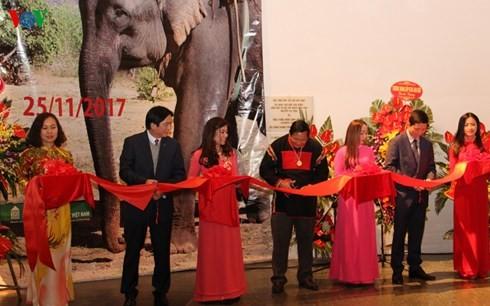 งานนิทรรศการเกี่ยวกับช้างในเขตที่ราบสูงเตยเงวียน - ảnh 1