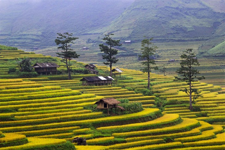 Harvest time in Mu Cang Chai - ảnh 8