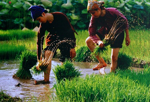 A glimpse of Vietnam through photo exhibition  - ảnh 8