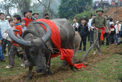 Long tong festival of the Tay in Lang Son - ảnh 1