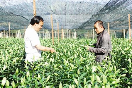 High-tech application boosts agricultural production at Langbiang  - ảnh 1