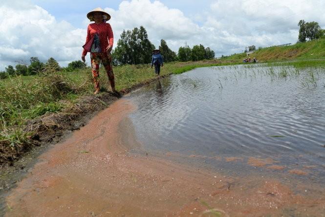 Fresh water reaches Vietnam's Mekong Delta provinces  - ảnh 1