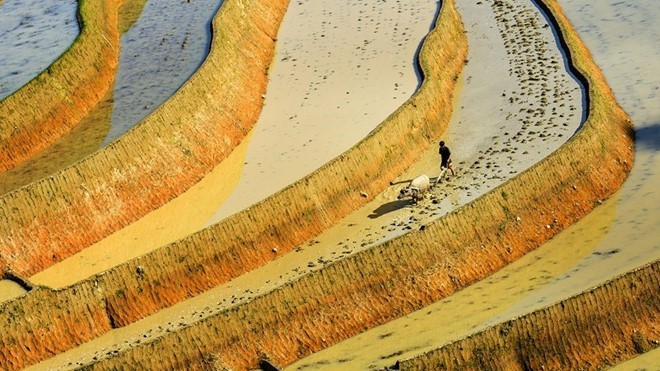 Hoang Su Phi terraced fields in rainy season - ảnh 11