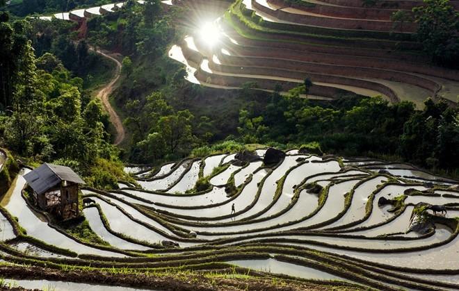 Hoang Su Phi terraced fields in rainy season - ảnh 5