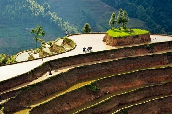 Hoang Su Phi terraced fields in rainy season - ảnh 7