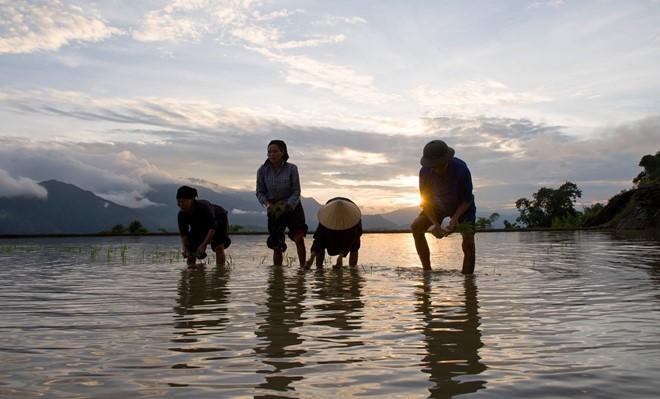 Hoang Su Phi terraced fields in rainy season - ảnh 8