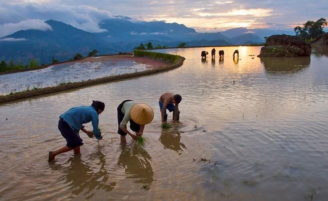 Hoang Su Phi terraced fields in rainy season - ảnh 9