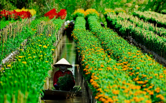 Visiting flower villages in Dong Thap Muoi - ảnh 2