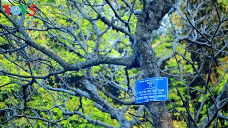Yen Tu Mountain, a sacred and peaceful Buddhist sanctuary - ảnh 16