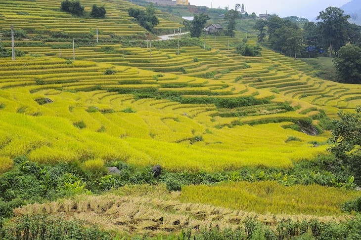 Yen Bai province, an alluring destination in the northwest - ảnh 4
