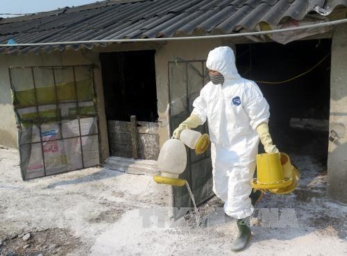 New A/H5N6 avian flu outbreak spotted in Quang Tri - ảnh 1