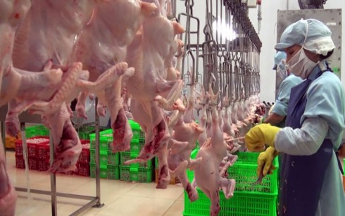 Vietnam exports processed chicken to Japan - ảnh 1
