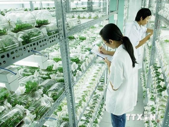 Vietnam analiza las medidas para impulsar el desarrollo agrícola basado en los avances tecnológicos - ảnh 1