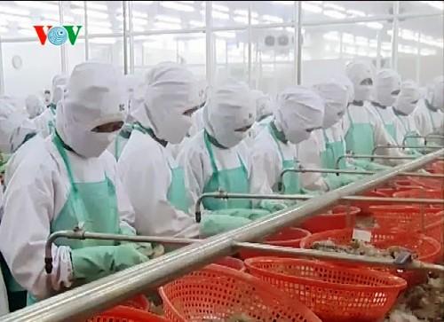 Vietnam considera a Asia como un mercado potencial de exportación de camarones - ảnh 1