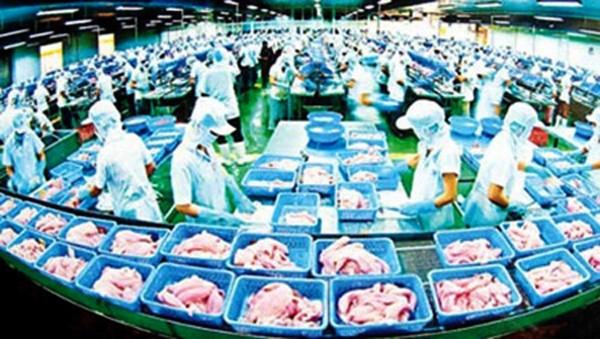 Vietnam aumenta el control del proceso de exportación de siluros a Estados Unidos - ảnh 1