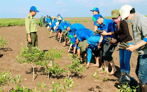 Un modelo de gestión de manglares litorales ayuda a recuperar el escudo frente al desastre natural - ảnh 2