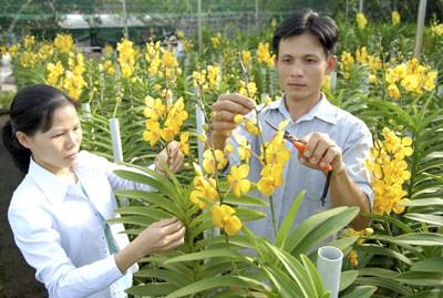 """Mengumumkan Laporan Nasional tentang Lingkungan Hidup  tahun 2014 : """"Lingkungan Hidup Pedesaan"""". - ảnh 1"""