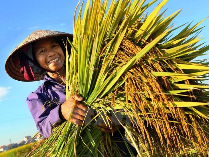 Vietnam prioriza la reducción de la desigualdad económica en el nuevo período de desarrollo - ảnh 1