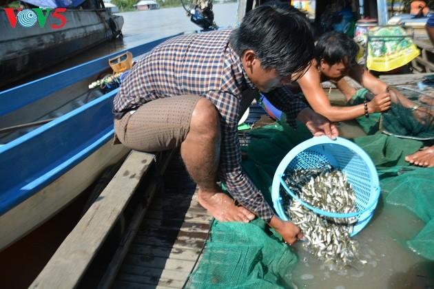 El Delta del río Mekong en la temporada de crecidas - ảnh 1