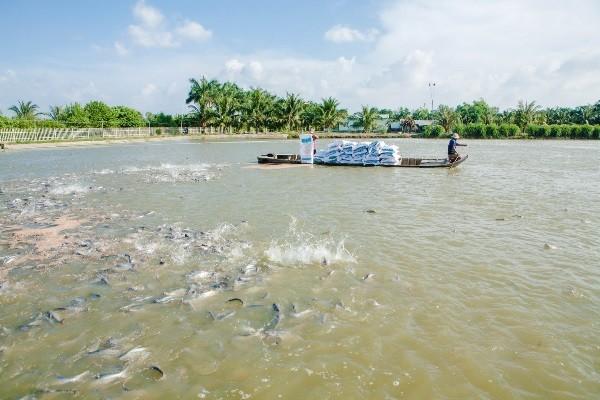 Vietnam traza la meta de lograr 9 millones de dólares el valor de exportación acuífera - ảnh 1