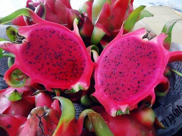 La provincia de Binh Thuan busca exportar pitaya de alta calidad al mercado mundial - ảnh 1