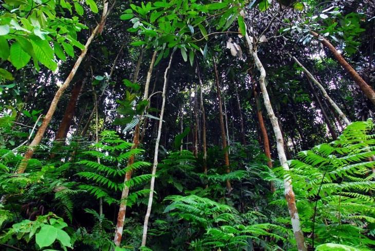 La canela ayuda a agricultores de Bao Yen a prosperar en tierra natal - ảnh 1