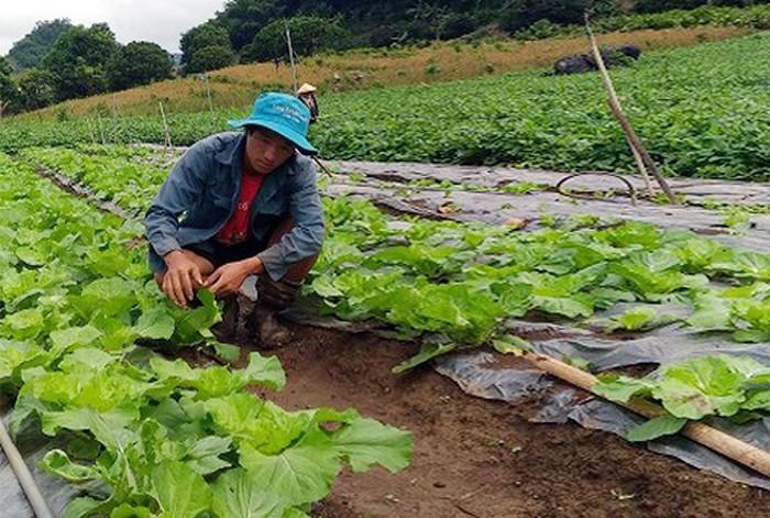 Aspiración emprendedora de los jóvenes étnicos iluminan las aldeas de Vietnam - ảnh 1