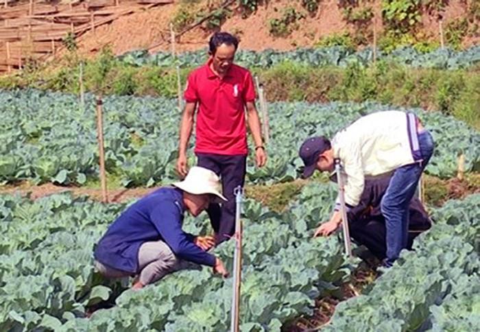 Aspiración emprendedora de los jóvenes étnicos iluminan las aldeas de Vietnam - ảnh 2