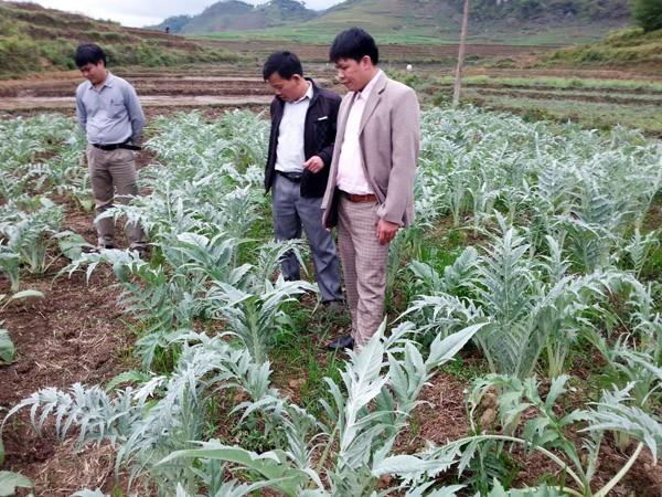 Agricultores de Quan Ba prospera con el cultivo de plantas medicinales - ảnh 1