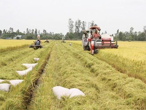 Vietnam impulsa el papel de las cooperativas en el desarrollo socioeconómico - ảnh 1