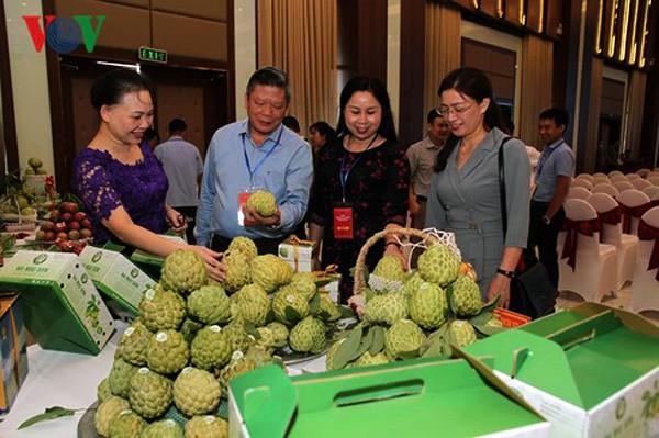 La provincia de Son La avanza gracias a la producción agrícola limpia y segura - ảnh 1