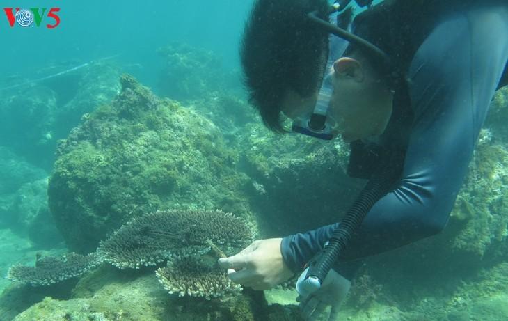 Semillero de brote verde en el fondo del mar - ảnh 1