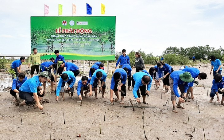 Fortalecen repoblación de bosques protectores en región sureña de Vietnam - ảnh 1