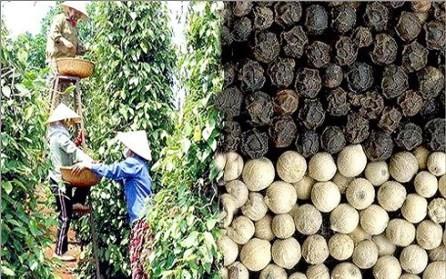 Oportunidad de los productos agrícolas vietnamitas - ảnh 1