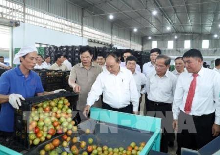 Llaman a aumentar inversiones en la agricultura  - ảnh 1