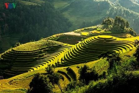 Celebrarán tercer Festival del Arroz de Vietnam  - ảnh 1
