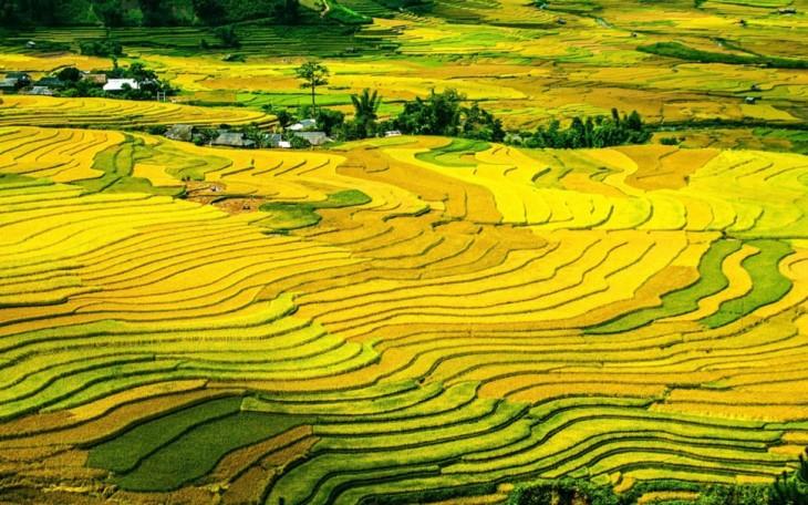 Mu Cang Chai, elegido uno de los paisajes más coloridos del mundo - ảnh 1