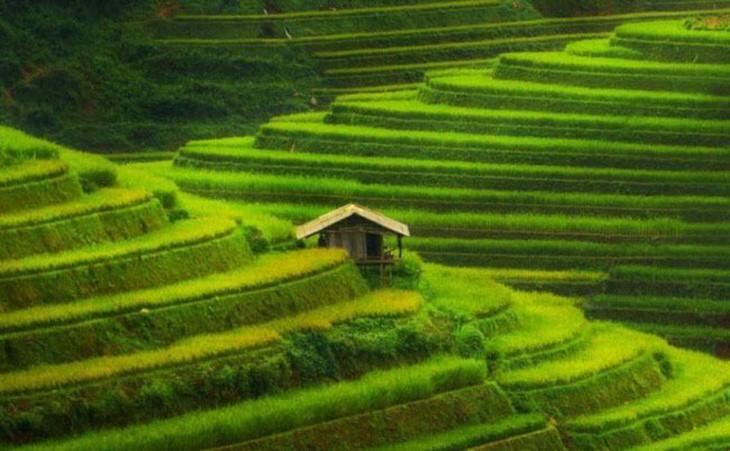 Mu Cang Chai, elegido uno de los paisajes más coloridos del mundo - ảnh 2
